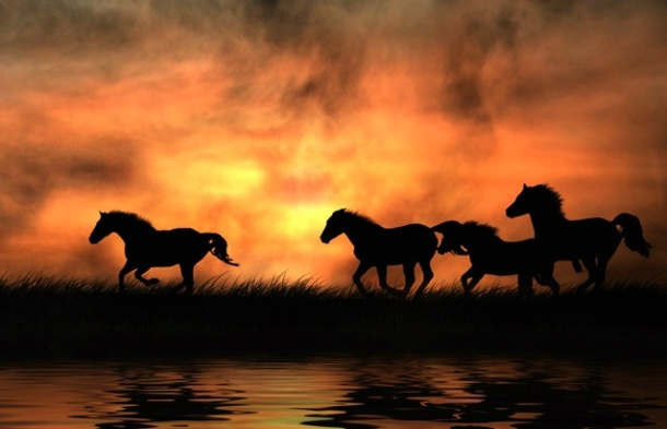 race horses.jpg