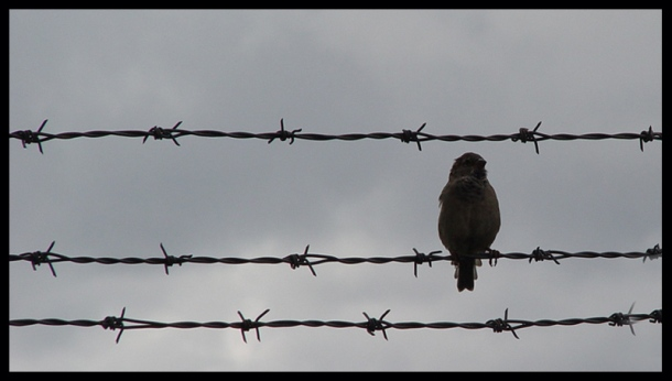 bird_on_a_wire